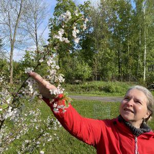Sanne Wikström står vid ett körsbärsträd.