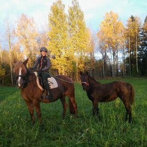 Ratsastaja hevosen selässä, mukana varsa.