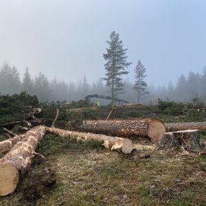 Fällda träd som ligger på marken.