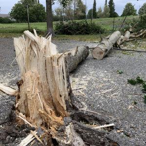 Presidentinpuistokadun koirapuistossa puut ovat kaatuneet juuria myöten.