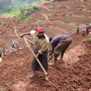 kvinnor i norra Rwanda brukar jord