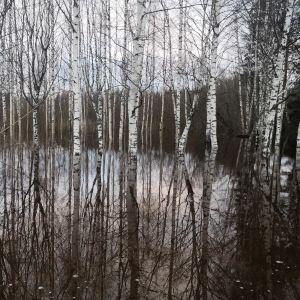 Metsään tulvinutta vettä