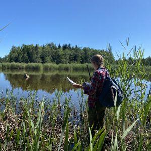 Anni Selenius står bland vass på strandkanten av en sjö och studerar ett papper och en telefon som hon håller i.