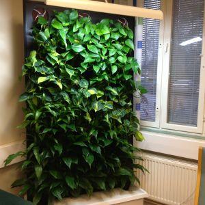Grönvägg som ska hålla inomhusluften bra.