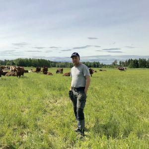 Jordbrukare bjarne Mara med sina kor.