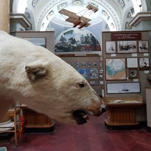 En uppstoppad isbjörn på museum i St Petersburg