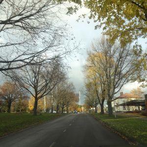 En väg med träd vid sidan.