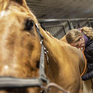Kati Lehtimäki ja hevonen