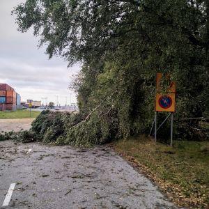Omkullblåsta träd på Vasklot i Vasa.
