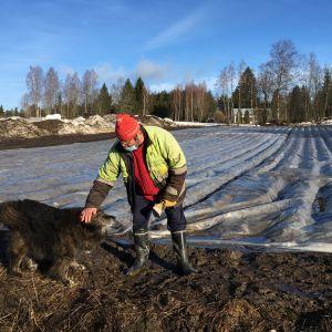 Mauno Pulkkinen perunamaalla koiransa Pepen kanssa.