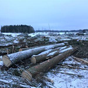Område där skogen huggits ner.