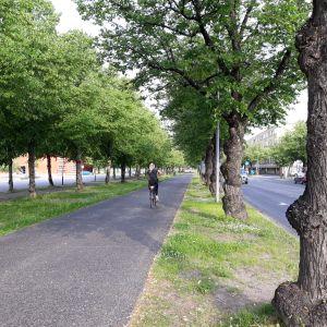 Nainen  pyöräilee kesäaamuna Siltakadun kevyen liikenteen väylällä Joensuussa.