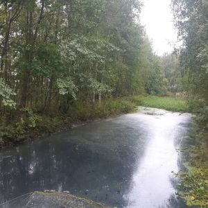 Säynäslahden kanavan vedenpinnalla tummasävyinen kalvo.
