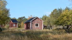 Ett skärgårdshemman med ett rött torp med vita knutar och en gårdsbyggnad.