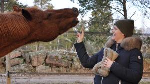 Hästen ser ut att rynka på näsan och har höjt huvudet och dragit upp överläppen så att tänderna syns.