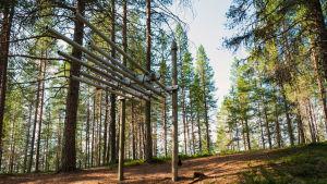 Pyöreistä putkista, jotka kiinnitetty pystypuihin, tehty kookas soitin, nimeltään viuhkaharmuuni, Suomussalmen Soivassa Metsässä.