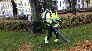 Lövblåsaren burrar i Lovisa