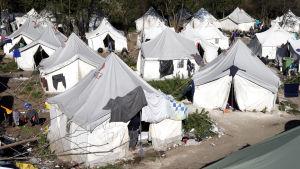 Massa vita tält på ett flyktingläger.