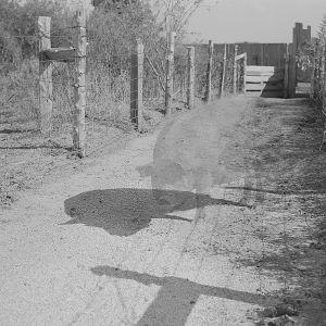 Pysäytyskuva Laura Gustafssonina ja Terike Haapojan videteoksesta. Mustavalkoisessa kuvassa erottuu läpikuultavan sian hahmo polulla, jota reunustaa piikkilanka-aita.