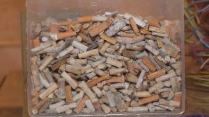 en glasskål (formad som en kub) fylld med tobaksfimpar.