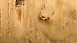 En närbild på en björkstam.