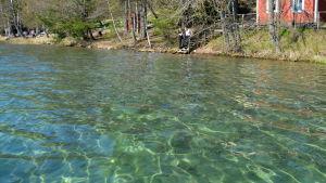 Strandbrynet vid Littois träsk. Vattnet i sjön är kristallklart.
