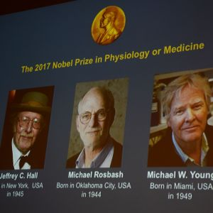 Porträtt med Jeffrey C. Hall, Michael Rosbash och Michael W. Young.