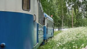 Blåa tågvagnar omgärdade av vita blommor.