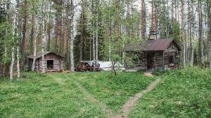 Harmaantunut pihasauna ja liiteri metsäaukealla.
