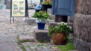 Stentrappa och krukväxter.