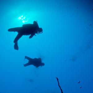 Dykare under ytan.
