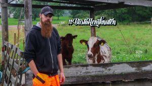 En man står framför en kohage och bredvid två kossor.