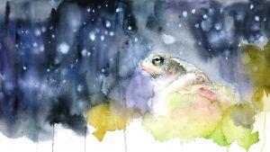 Minna Pyykön akvarelli: Rupikonna ihailee tähtitaivasta