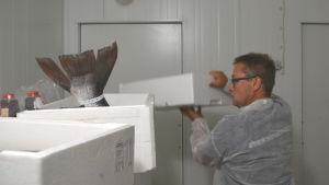 Man står i förråd. Ur en låda sticker en stor fiskstjärt upp.