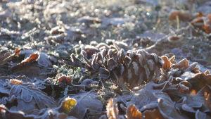 En kotte täckt av rimfrost-