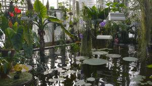 växter i botaniska trädgården i åbo