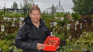 Leif Blomqvist i regnet med nyplockade jordgubbar