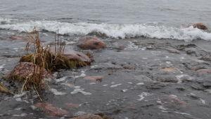 Havsvatten vid Kopparnäs i Ingå.