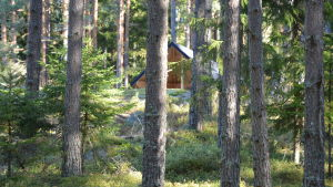 Vindskydd i skogen i Kimito