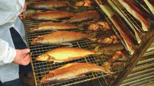 En plåt med rökt fisk.