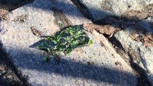Krossad, grön glasskärva på kullersten.