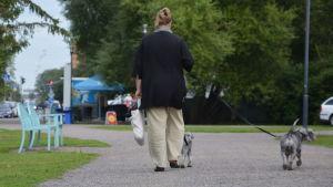 En kvinna är ute och går med sina två småa terrier-hundar i en park, fotad bakifrån.