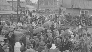 Svartvit bild av många människor som väntar i en hamn. Det är ingermanlänningar som väntar på att åka från Paldiski till Hangö.