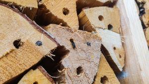 Närbild på ett insektshotell. En insekt sitter på en vedbit med hål i.