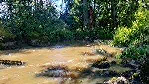 Nedre delen av en fors: man ser brunt vatten med lite skum i som åker genom en skogsdunge.