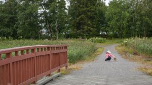 Kråknäsgrunden är ett populärt ställe bland hundägare.