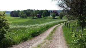 En byväg går förbi grönskande ängar ner mot ett rött hus och jordbruksbyggnader.