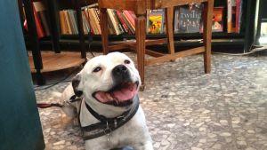 Hunden Djingis är stamkund i den skandinaviska bokhandeln i Fuengirola