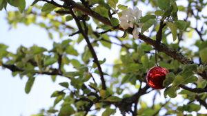 En julgransboll hänger i ett träd ute på sommaren.
