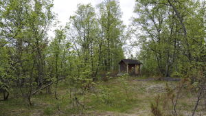 Liten sommarstuga i grönskan på Hanhikivi